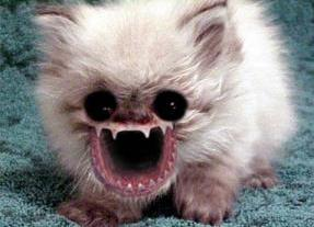 Chat Qui Fait Peur chat requin - chat photo qui fait peur